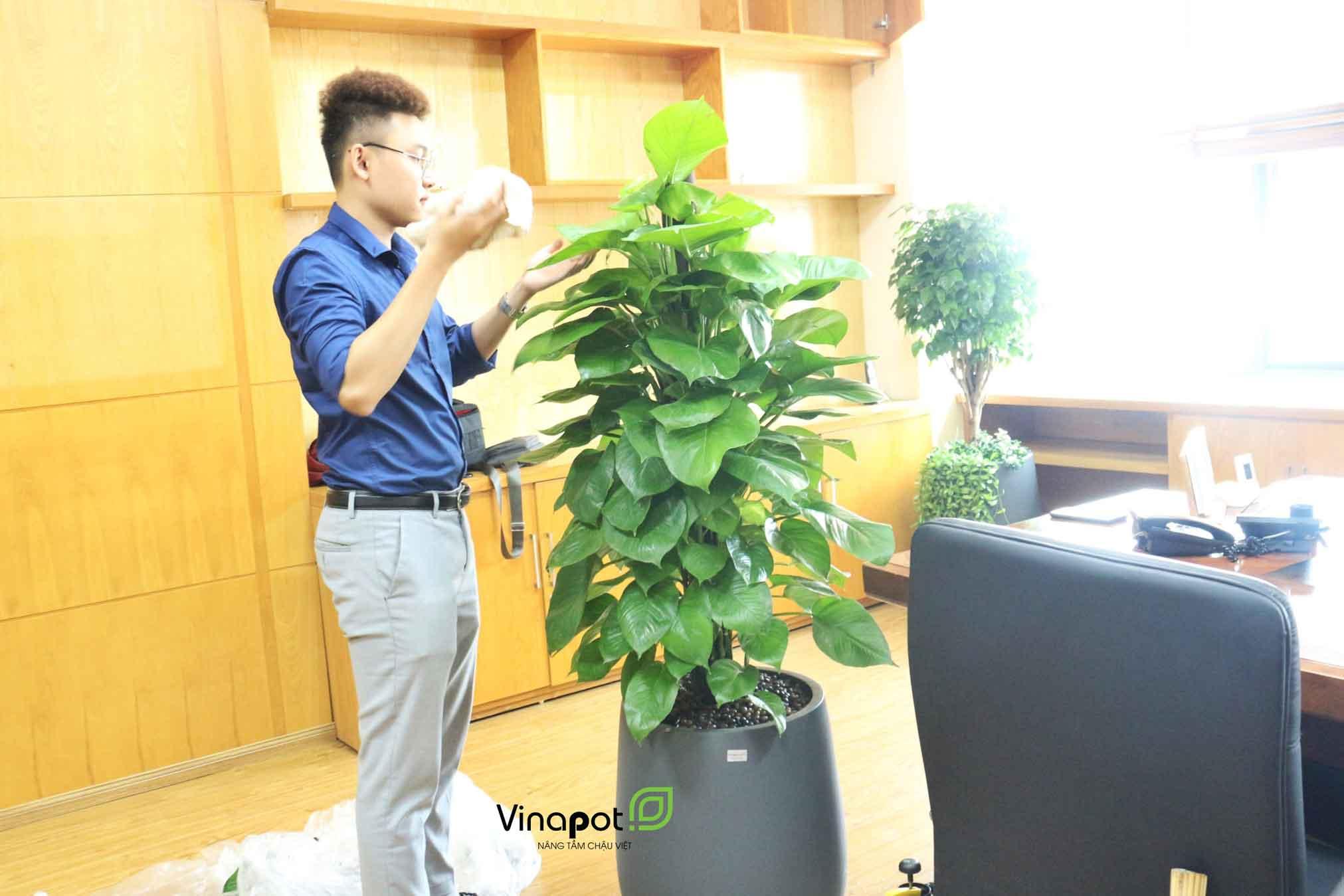 Chậu composite cao cấp tại Vinapot