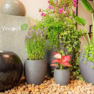 Chậu xi măng nhẹ xuất khẩu Lemon của Vinapot